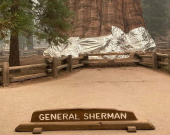 بزرگترین درخت جهان آلومینیوم پیچ شد